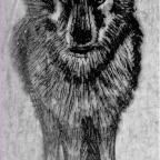 Un bestiaire fabuleusement d'actualité: Le Loup végétalien et autres fables contemporaines de Pierre Ferrand et Mary-des-ailes